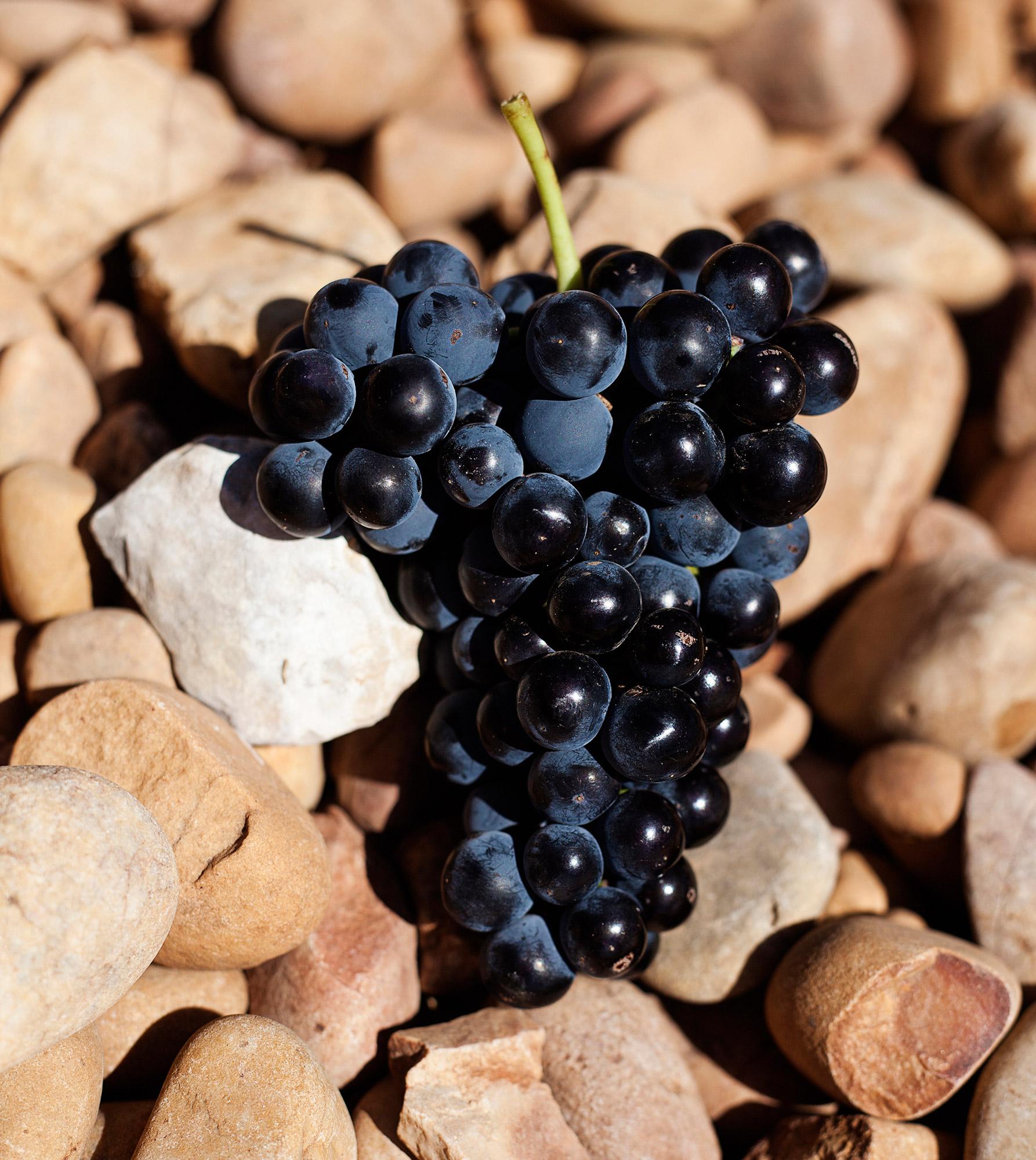 Hispanica Wines racimo de uva tinta