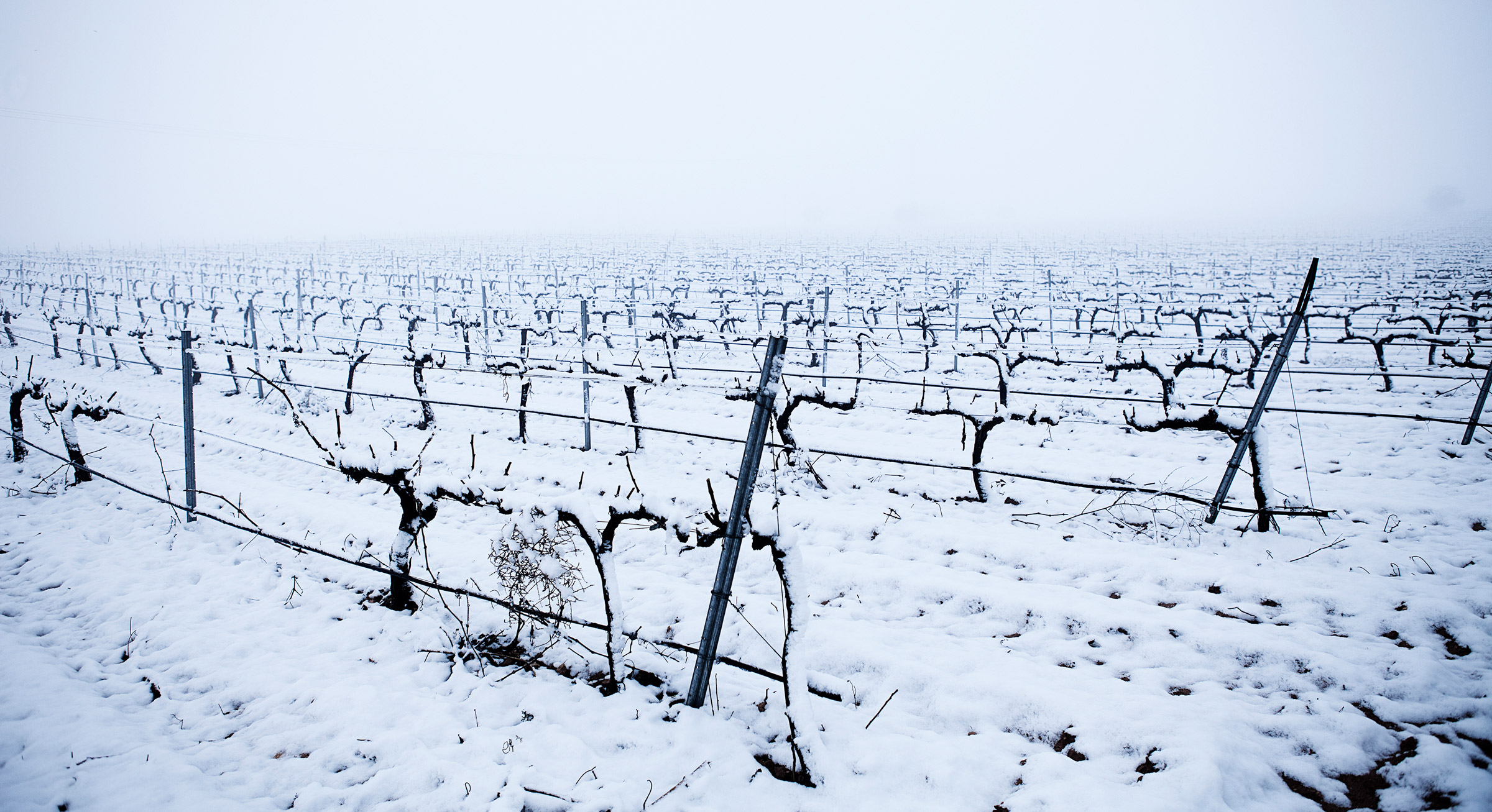 Hispanica Wines emparrado nevado